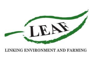 Leaf Marque